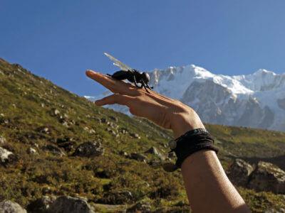 Namáslu 2015 / Náš talisman. Moucha obecná. Bez ní ani ránu. taky s náma pěkně šlapala nejen na treku, ale i směrem k vrcholu.